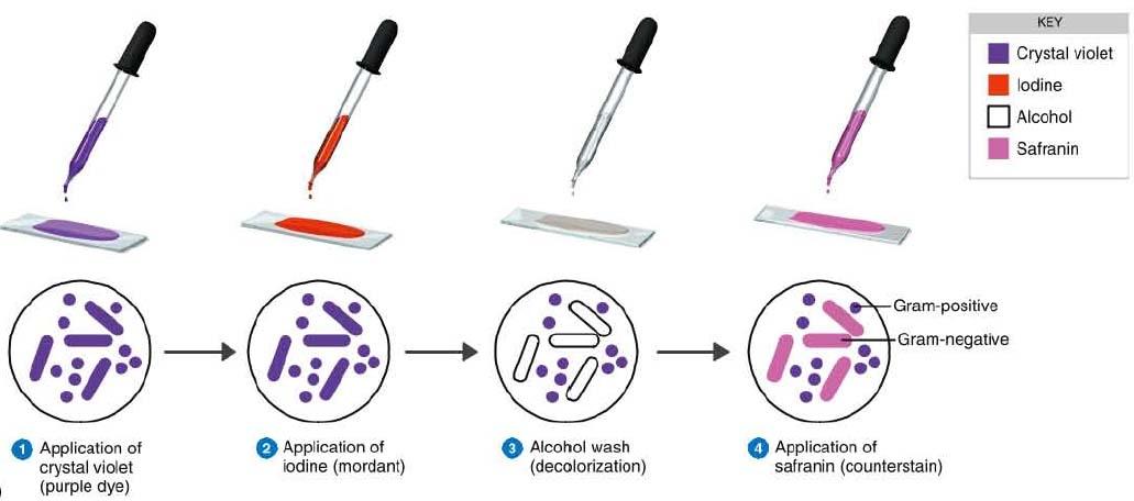 monoclonal antibody wiki