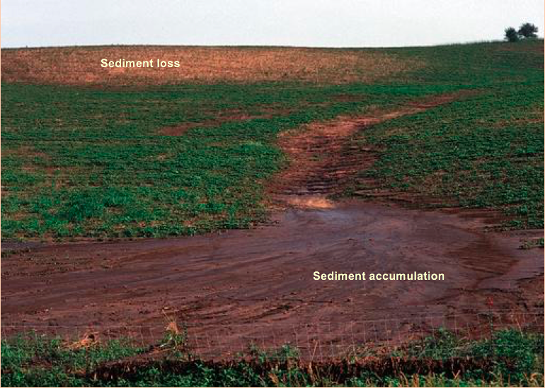 Loss of productivity and sediment accumulating due to erosion sometimes can be seen in the same field as showing in this photo