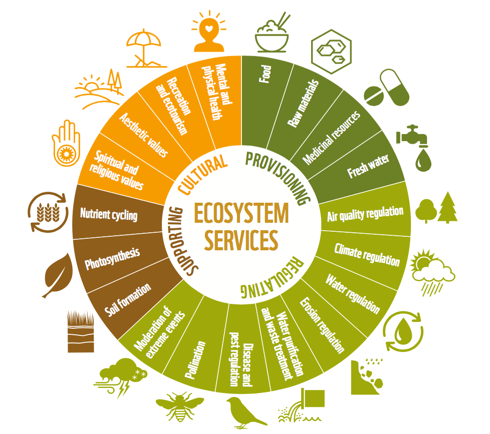 Ecosystem Services Types.png
