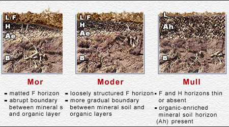 Root fungi overview for Mineral soil vs organic soil