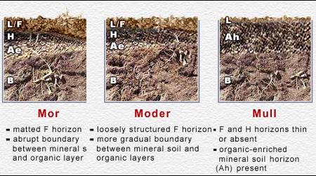 Root fungi overview for Mineral soil vs organic soil
